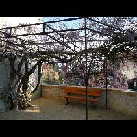 Chanas-10-04-2008.01.jpg - image/jpeg