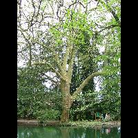 MEYLAN 24-04-2008.34 - image/jpeg