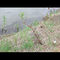CHANAS-01-03-06-2008.jpg - image/jpeg